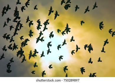 Flock of pigeons in sunset sky. Silhouettes of birds of peace, pacificist