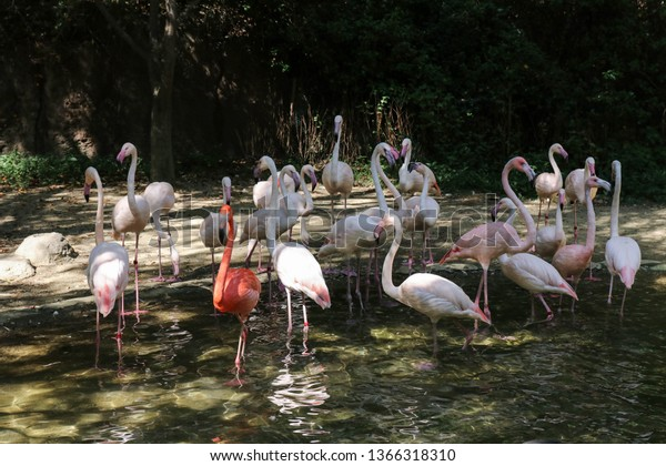 flock-pink-flamingos-zone-zootopia-600w-