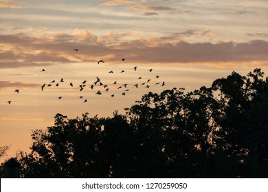 A flock of seabirds flying in the sunrise in Everglades National Park in FlorIda, U.S.