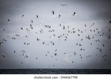 a flock of seabirds flying together over the ocean