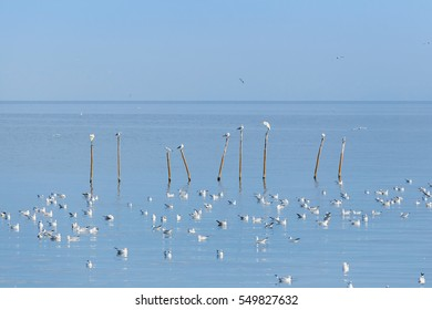 Flock of seagulls floating on the water surface of sea and standing on top of wood sticks row in the sea with clear blue sky.