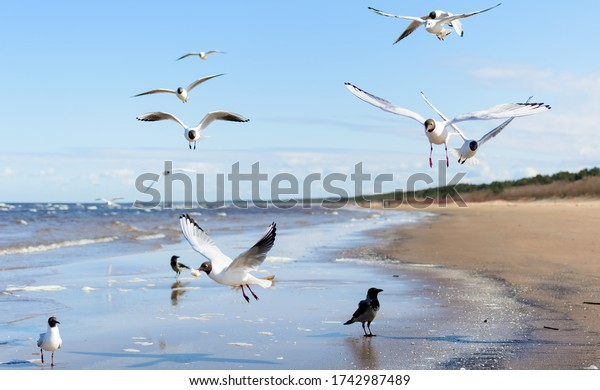 flock-seagulls-flying-above-water-600w-1