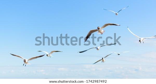 flock-seagulls-flying-blue-sky-600w-1742