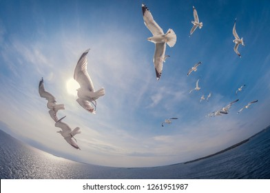 flock of seagulls flying over the sea with a background of blue sky, fisheye distortion