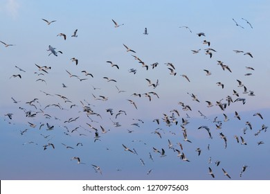 Flock of seagulls flying in the sky.