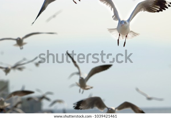 Flock of seagulls flying in the sky. Selective focus and shallow depth of field.
