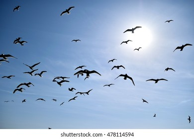 flock of seagulls flying towards the camera with the sun in the background