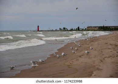 A flock of Seagulls (Laridae) some flying and some grounded watch the deadly treacherous wave crashing on the Kenosha, Wisconsin beach of Lake Michigan.  Evening waves are in the five foot size range.