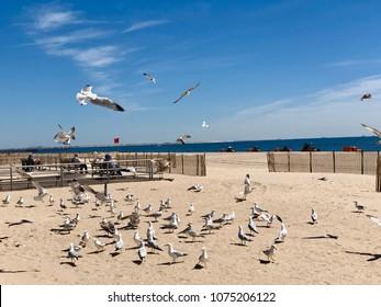 Flock of seagulls on sand in Brighton Beach, Brooklyn, New York.