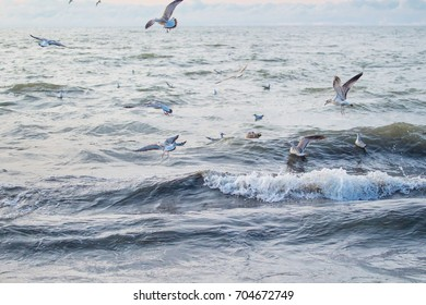 A flock of seagulls on the water in the sea