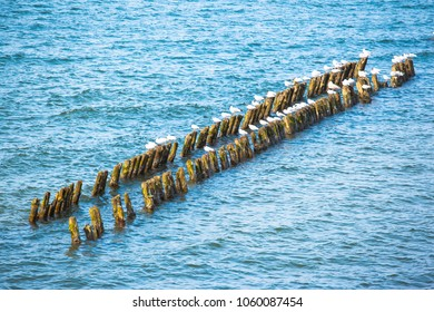 a flock of seagulls are sitting on breakwaters in the sea on a sunny day
