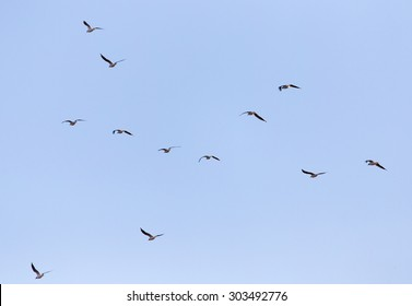 A flock of seagulls in the sky