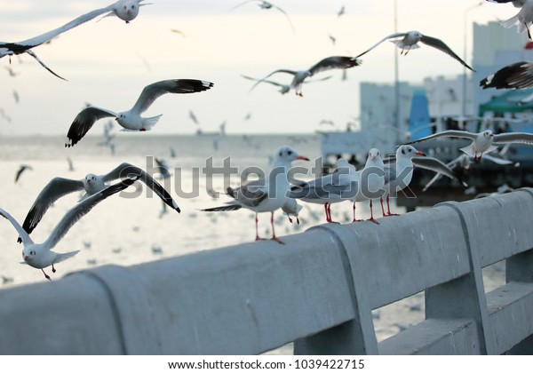 Flock of seagulls standing on stone fence. Selective focus and shallow depth of field.