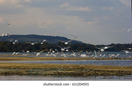 A flock of seagulls takes off over the river