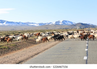 flock of sheep and goats a cross the road