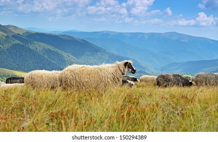 A flock of sheep grazing in a beautiful mountain area