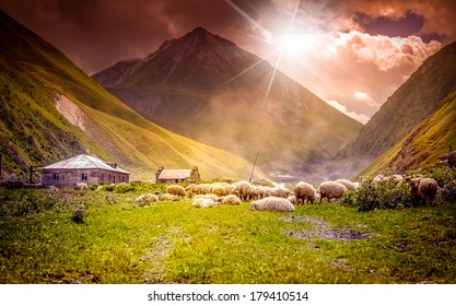 flock of sheep grazing in a mountain valley at sunset
