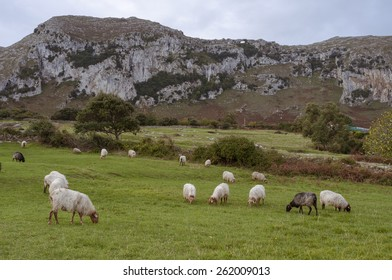 A flock of sheep grazing on the hill.