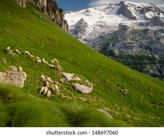 A Flock of Sheep with Mountain Tops and Meadows in Summer, Dolomites, Alps, Italy