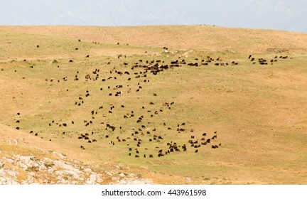 a flock of sheep on the pasture