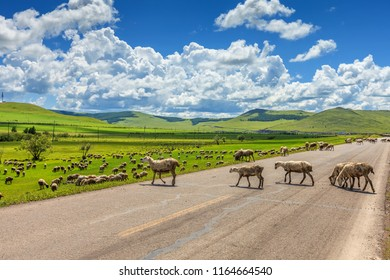 Flock of sheep on the prairie under blue sky and white clouds