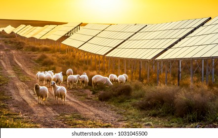 Flock of sheep pasturing under the sun is below the solar panel