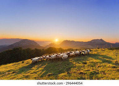 Flock of sheep in Saibi mountain. Urkiola, Basque Country