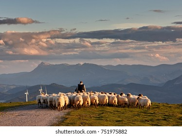 Flock of sheep with shepherd in Oiz, Basque Country