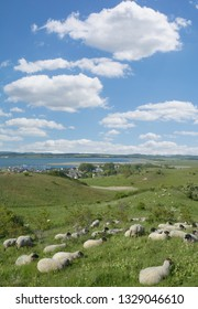 Flock of Sheep and Village of Gager in Background on Ruegen,baltic Sea,Mecklenburg western Pomerania,Germany