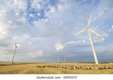 flock of sheep and windmills