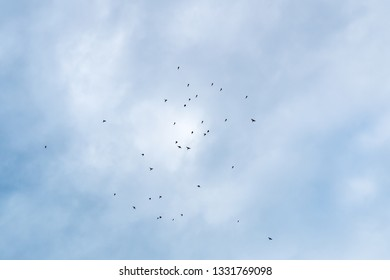 a flock of small birds in the sky