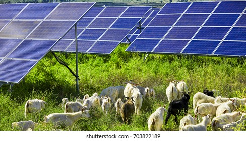 The flock of solar photovoltaic