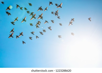 flock of starlings with bright blue sky