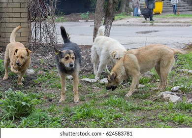 Flock of stray homeless dogs on a city street