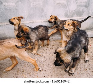 Flock of stray puppies running with each other.  hungry homeless puppies from shelter running somewhere