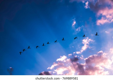 Flock of swans against blue sky