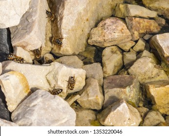 flock of wasps on stones by the water