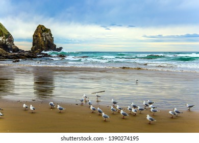Flock of white cormorants resting in the sand. Cannibal Bay on the South Island, New Zealand. Wide beach with white sand and blue-green water. The concept of ecological, active and phototourism