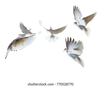 A flock of white pigeons on a white background