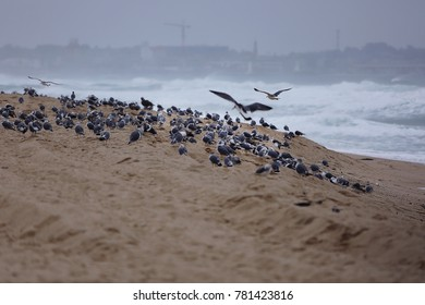 A flock of winter sea gulls