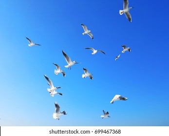 Flocks of flying seagull in clear blue sky.