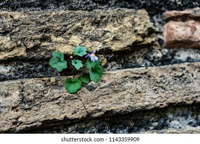 Floer growing out of a wall