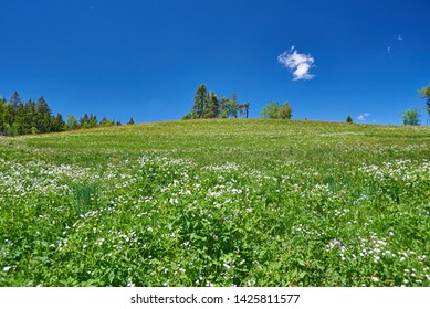 Floering meadow in the Black Forest with blue sky.