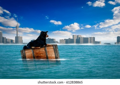 Flood Dog City Riding an oak barrel floating in the sea on a bright, beautiful day.