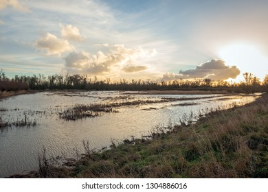 Flooded area in Dutch National Park Biesbosch just before sunset at the end of a sunny day in the winter season.