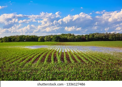 Flooded cornfield in the spring in Wisconsin