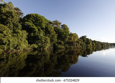 Flooded forest at Anavilhanas National Park, at Negro River, Amazonia Forest, near Novo Airão city, Amazonas, Brazil