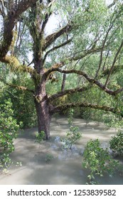 Flooded forest at Hiron Point in Sundarbans, Bangladesh.