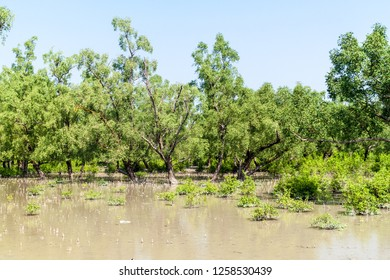 Flooded forest at Hiron Point in Sundarbans, Bangladesh