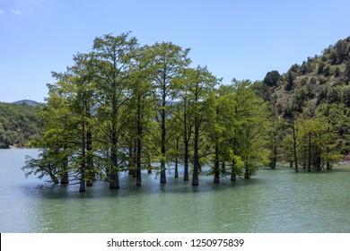 Flooded forest, Lake Sukko, Caucasus Mountains, Russia.